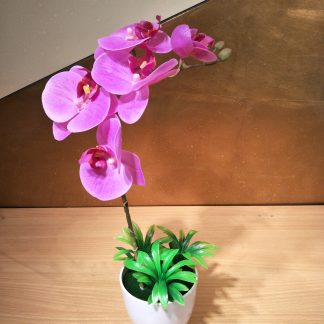 Tiny Moth Orchid Arrangement